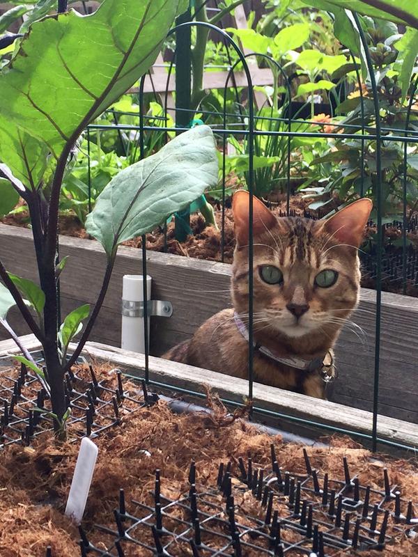 8592448_01_safe-cat-deterrent.jpg