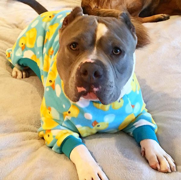 Dog in pjs.jpg