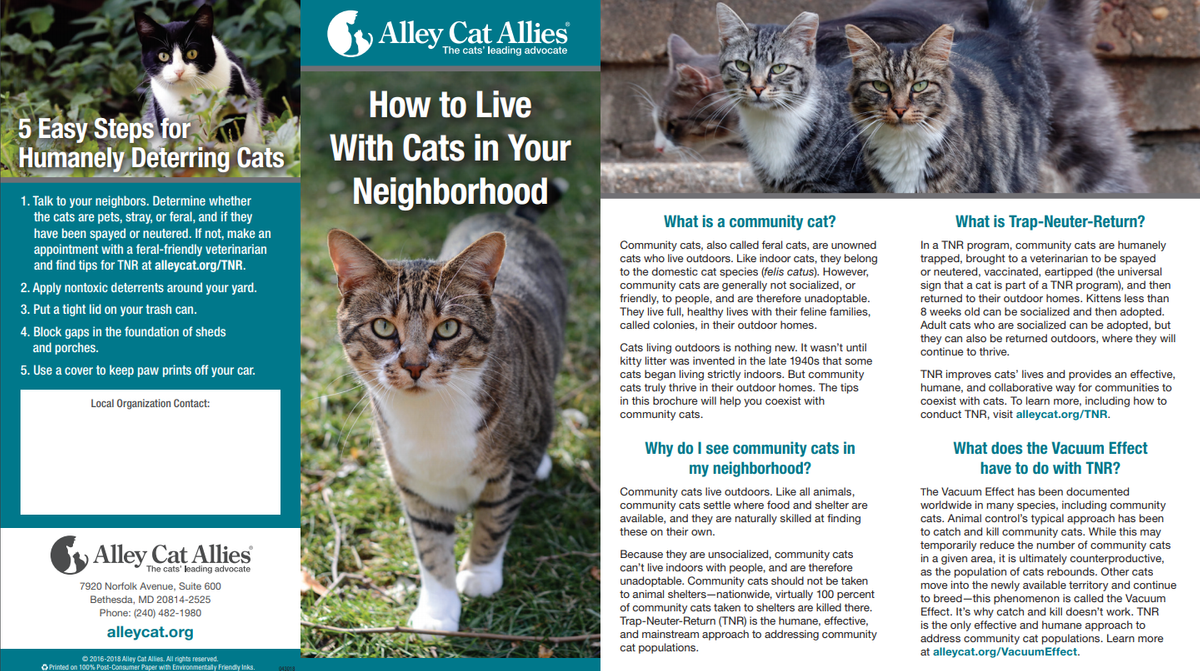 how to live with cats in your neighborhood.png