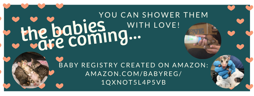 Baby Pink Shower Hearts Facebook Cover.png