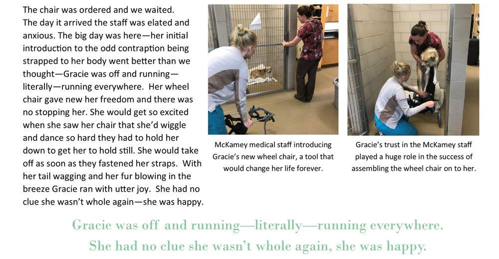 Gracie Story3.jpg