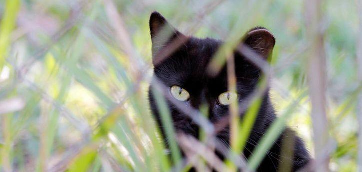 ccp cat.jpg