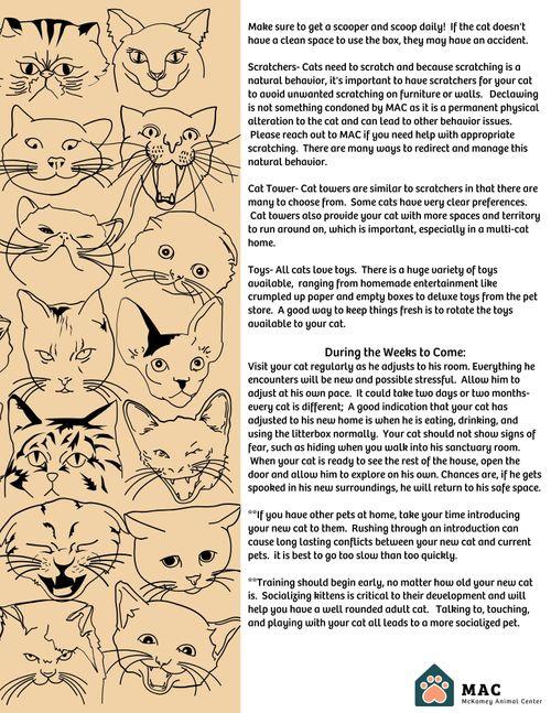 Your New Cat (1).jpg