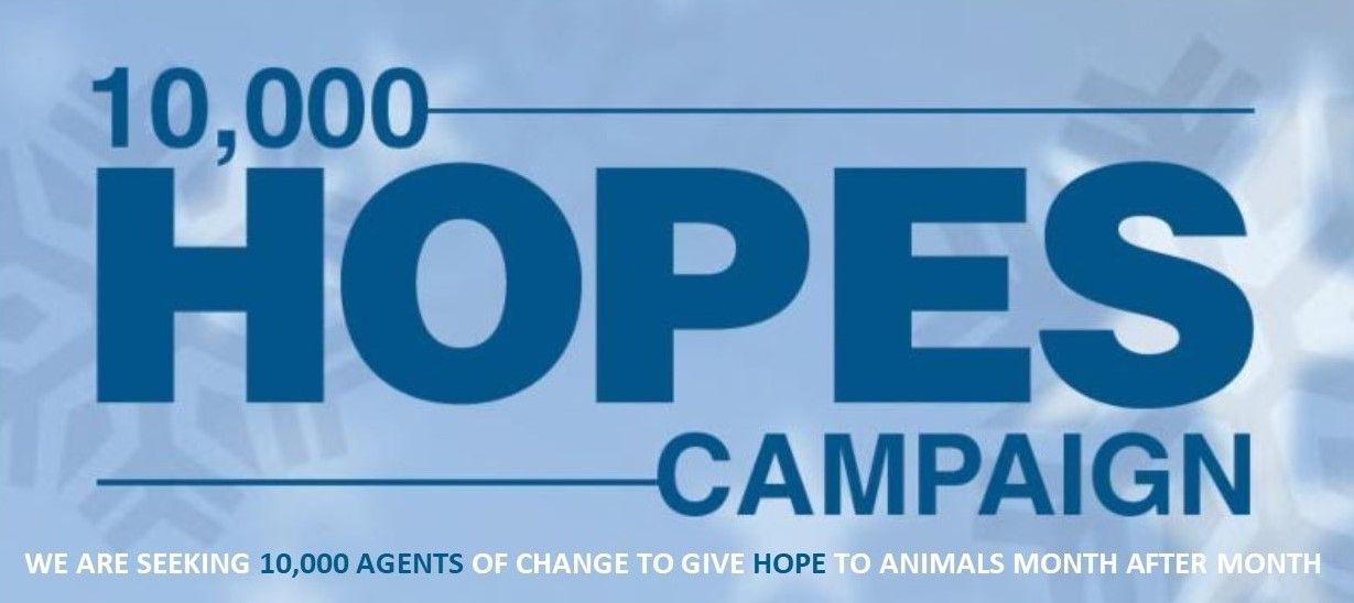 10,000 Hopes Website Scroller.jpg