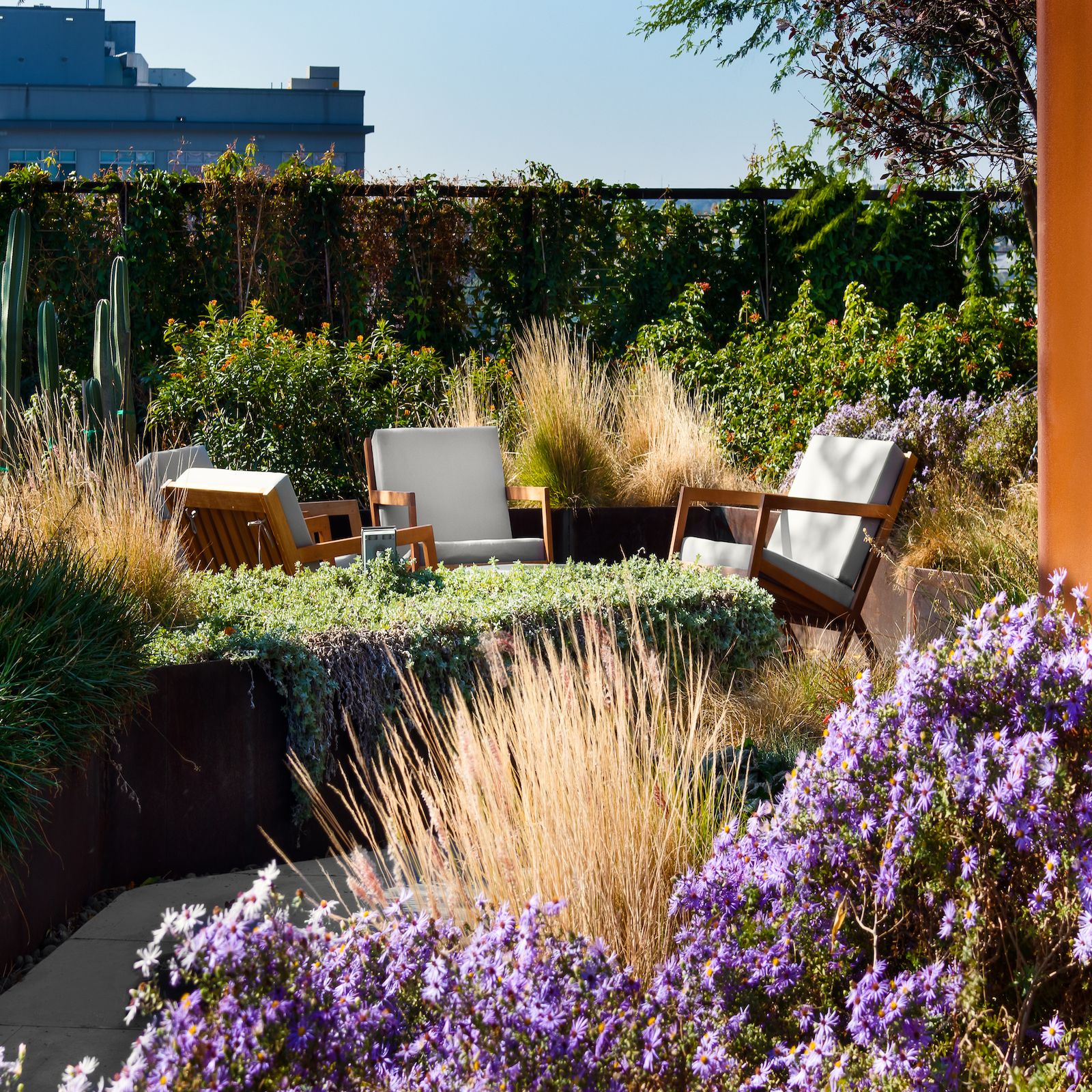 Image of chairs in a modern condo building garden with lilacs and cacti