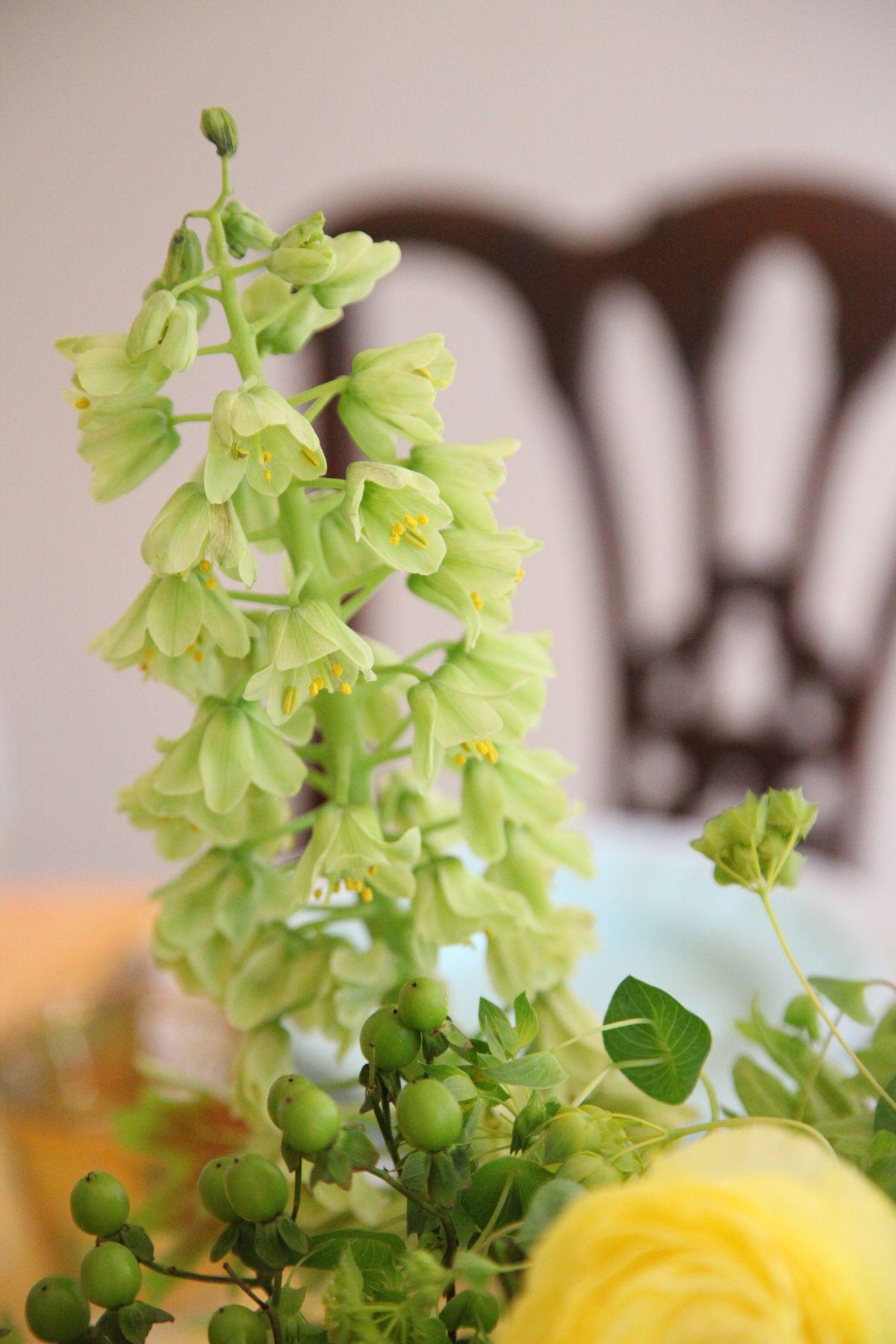 flitillaria