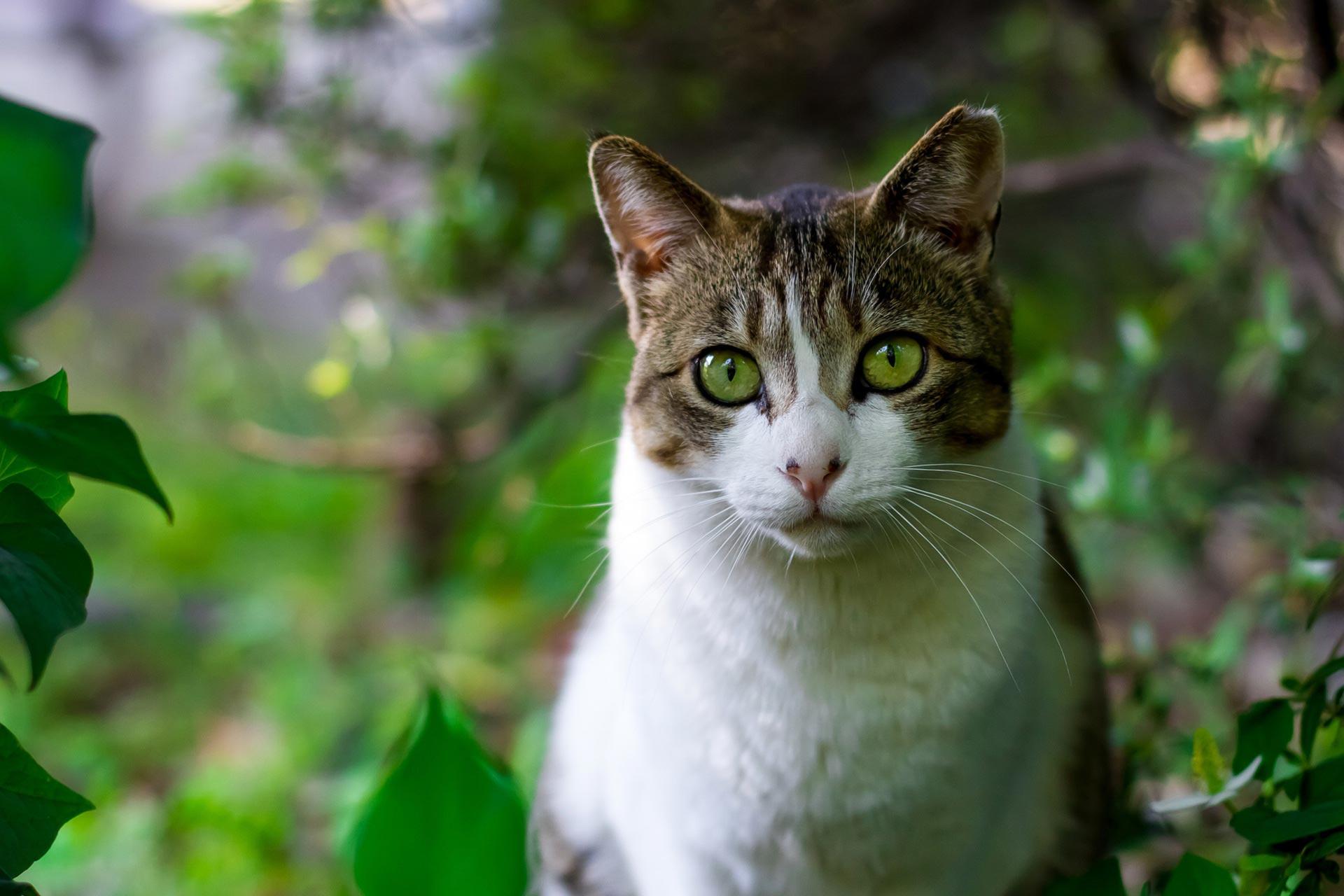 cat-tokyo-japan-japanese.jpg