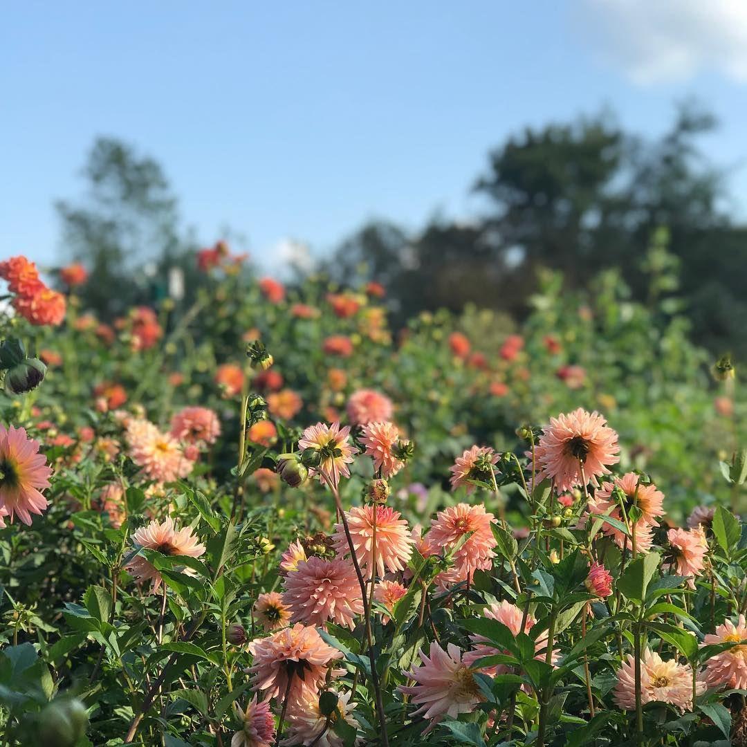 flower farm 2.jpg