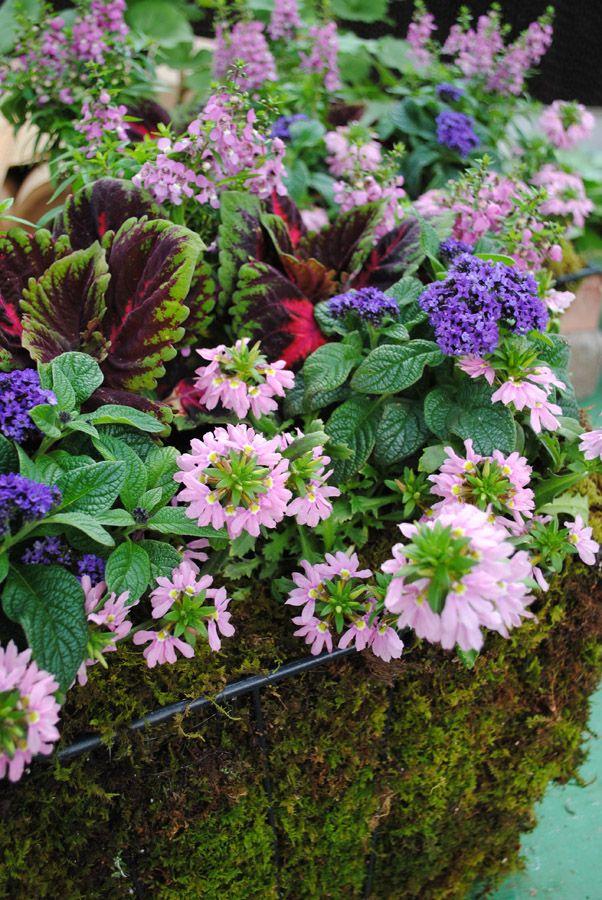 floral (2).jpg
