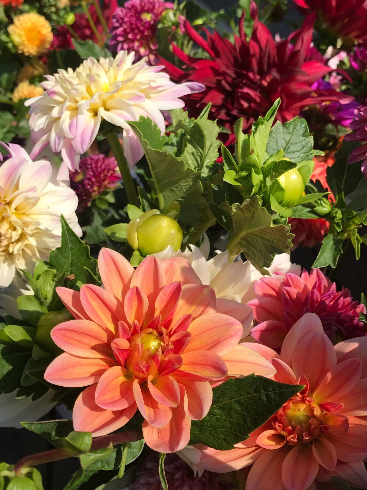 flower farm.jpg