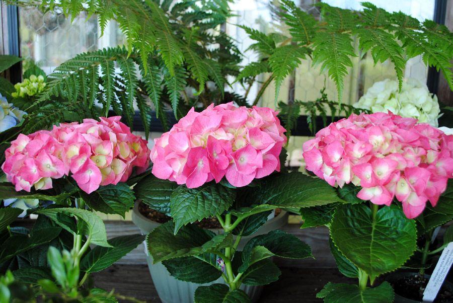 floral (4).jpg