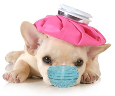 Puppy Flu Upload w Mask2.png