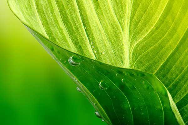 sustainability-leaf.jpg