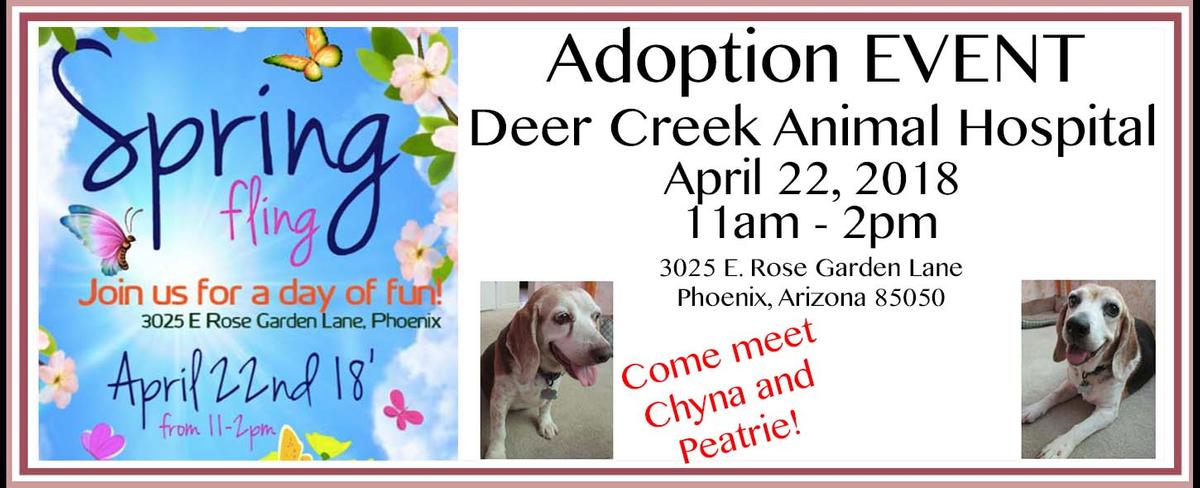 Monthly Adoption Event Slide_DeerCreekAnimalHospital.jpg