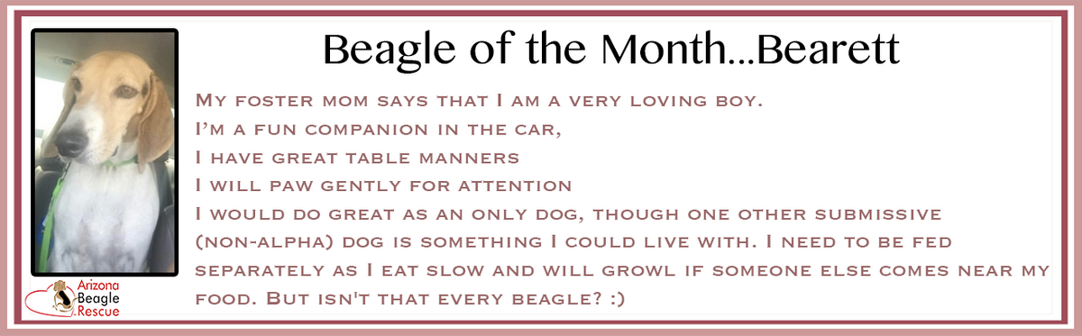 2017 January_Bearett_Beagle of the month_Adopt Page.png