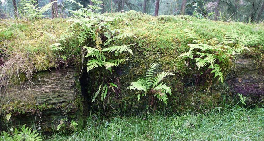 sierra club wooded surroundings