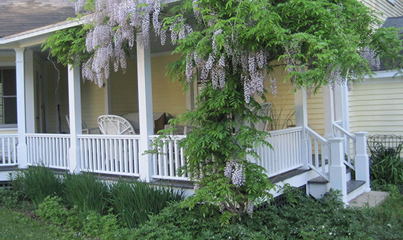 Porch in Summer.jpg