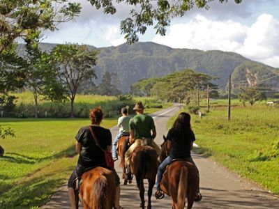 Horseback ride through tobacco country.jpg