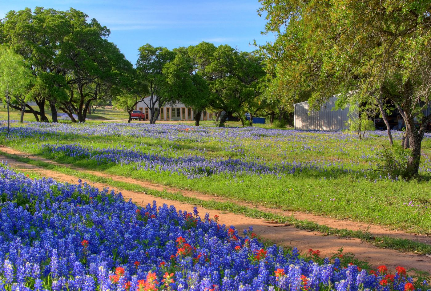 Texas Wildflower Wedding Venue