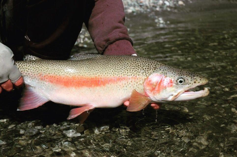 Fly fishing FAQ