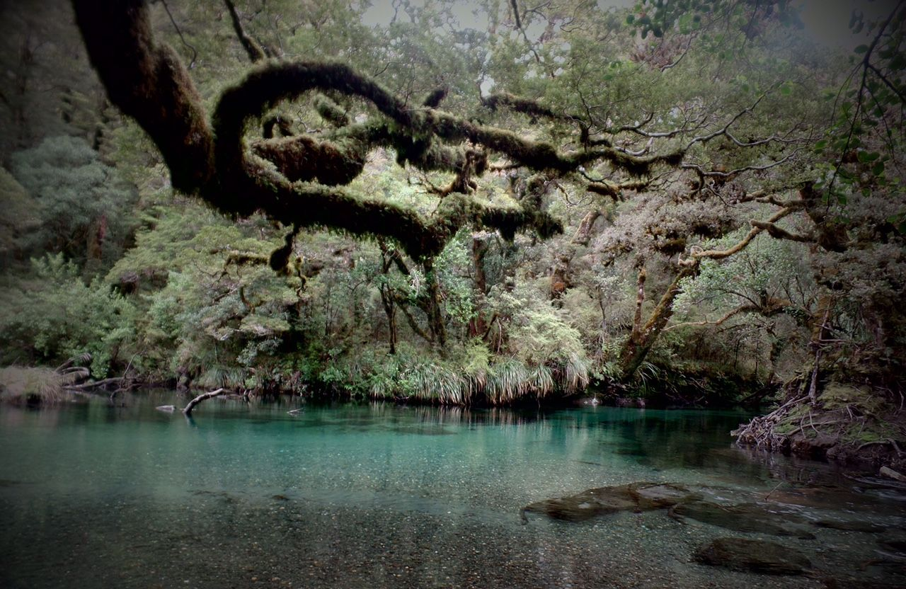 Guided Fishing and hunting in Fiordland