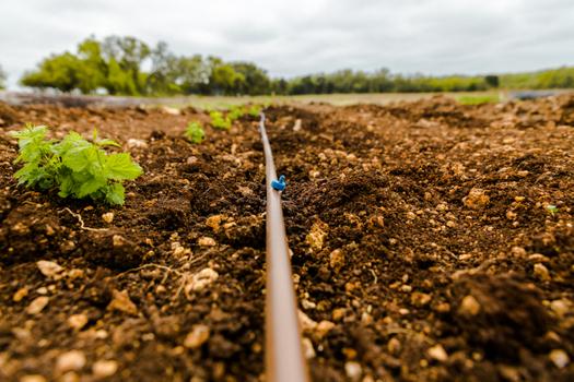 hop planting 7.jpg