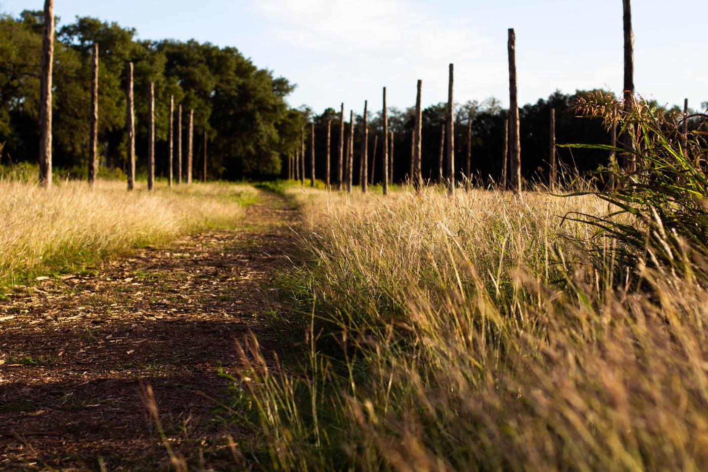 trail 7 (1).jpg