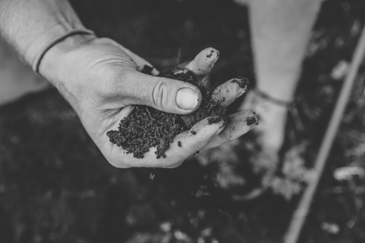 hop planting 4.jpg
