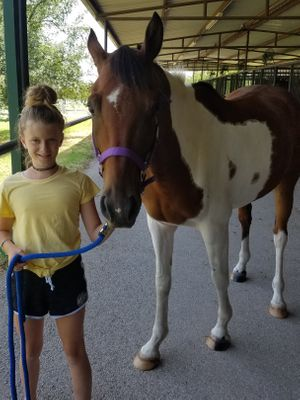 Beginner horseback riding lessons