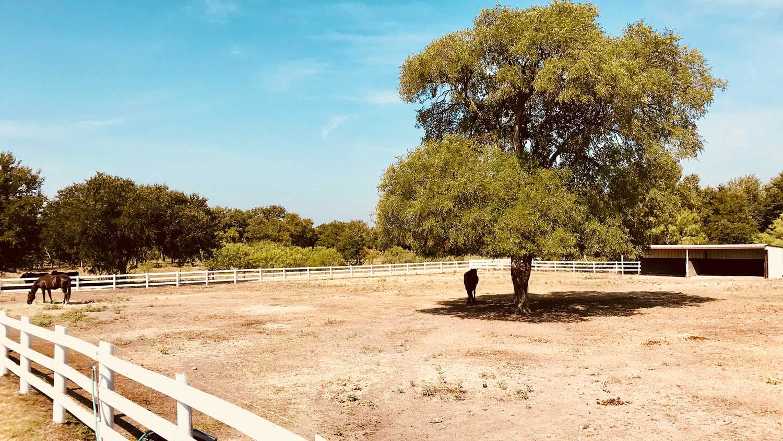 Austin Horse boarding and training facility