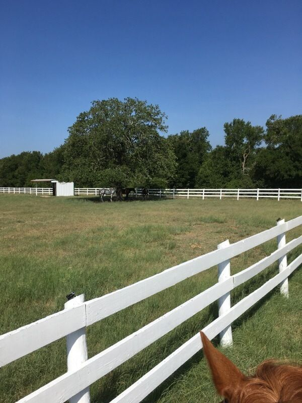 Professional Horse Training Facility in Manor, Texas