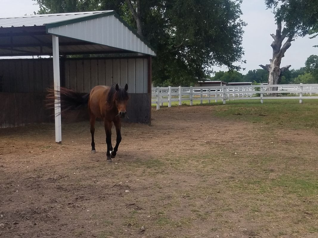 dressage training boarding