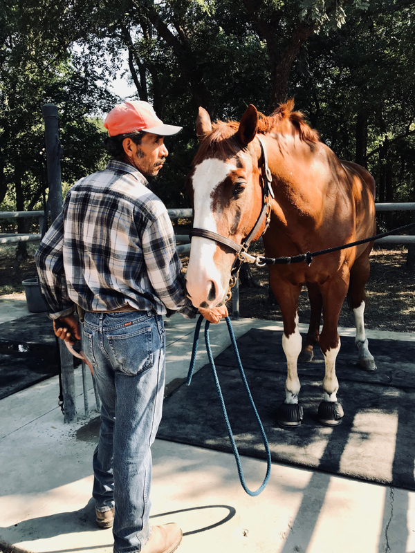 Martin, Ranch Hand at White Fences Equestrian Center