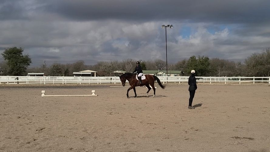 horseforsaledressage