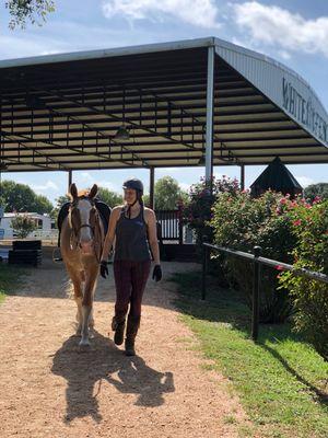 Saddle Club