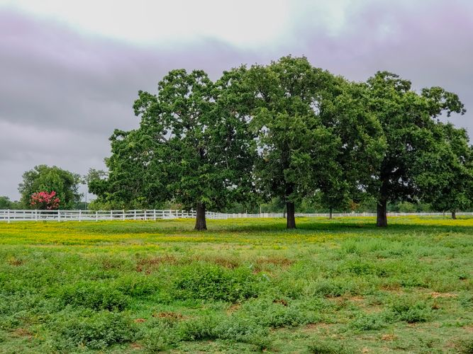 Pasture Board Manor Texas