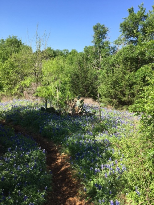 Austin Trail Rides