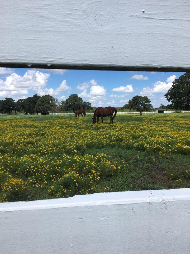 pasture boarding