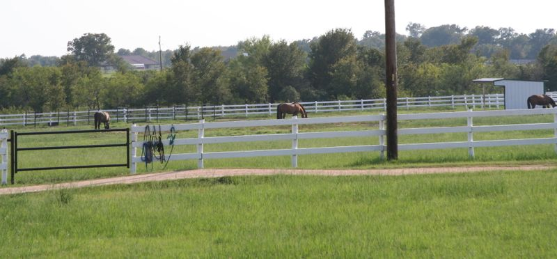 Our Horse Boarding Stables and Equestrian Facilities - White