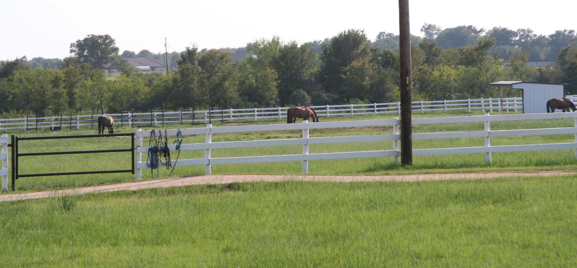 Horse Boarding Austin