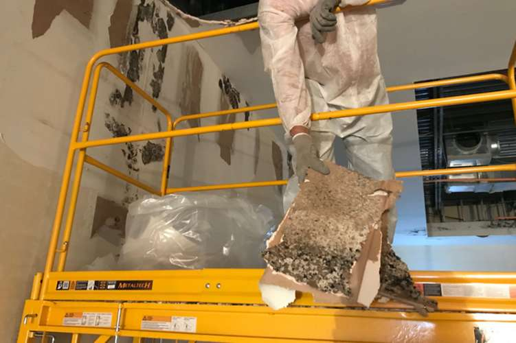Cotton GDS commercial disaster solutions team restores mold damage  in Conway, SC