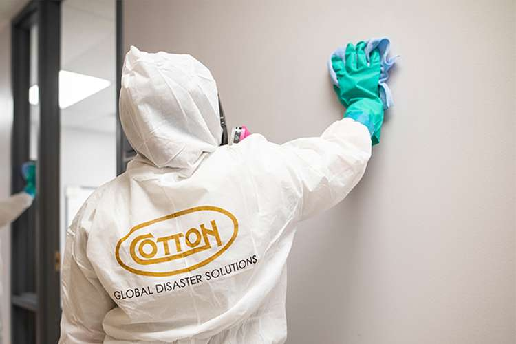Cotton GDS commercial disaster solutions team removing mold in Panama City, FL