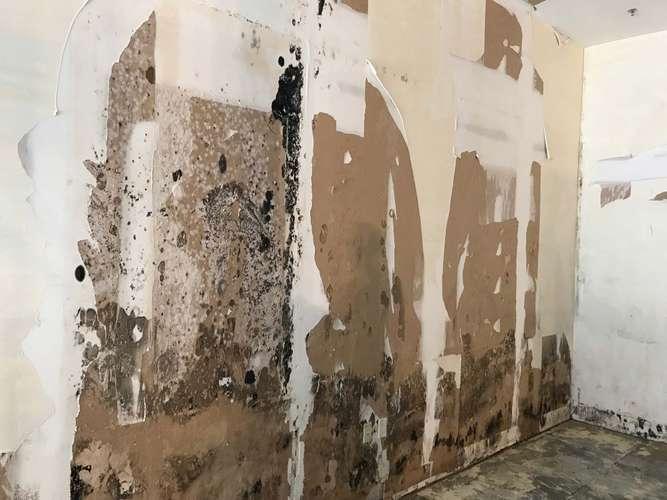 Commercial mold damage in Fort Lauderdale, FL