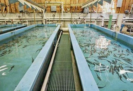 Private-Utility-Locating-at-Fish-Hatchery-Southern-Illinois-02.jpg