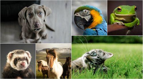 BeFunky+Collage.jpg
