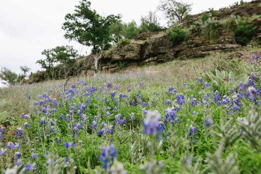 Gallery - Bluebonnet Cliff.jpg
