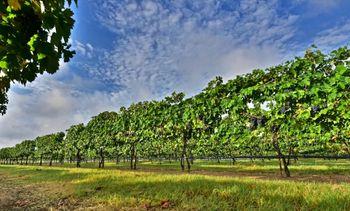 Texas Wine.jpg