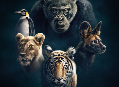 BBC Earth Series: Dynasties - Chimps - NO COVER
