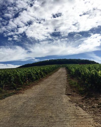 Hill of Corton with Bonneau du Martray
