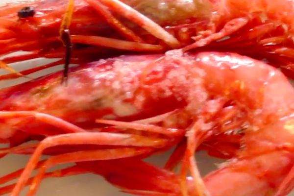prawns from palamos